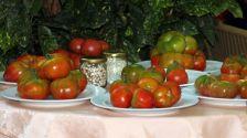 Inscripció oberta de les  6es Jornades Gastronòmiques dels tomàquets del Vallès fins demà.