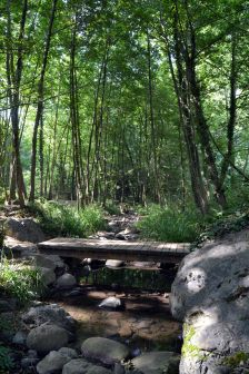 Una passera semblant aquesta s'inclourà al nou tram de l'itinerari del passeig fluvial.