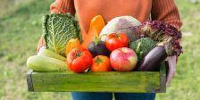 S'establiran controls estrictes al llarg de tota la cadena de subministrament així com mesures preventives sobre l'ús de pesticides i fertilitzants químics.