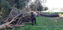 gestió forestal