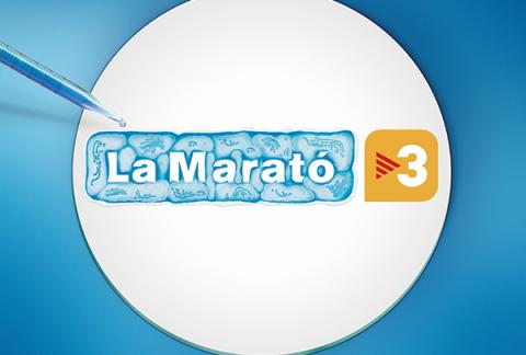 banner marato tv3